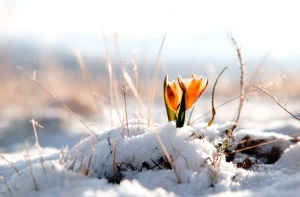winter_flower_wallpaper_025